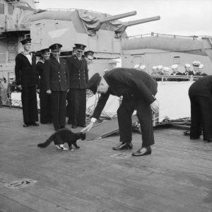 кошка на корабле