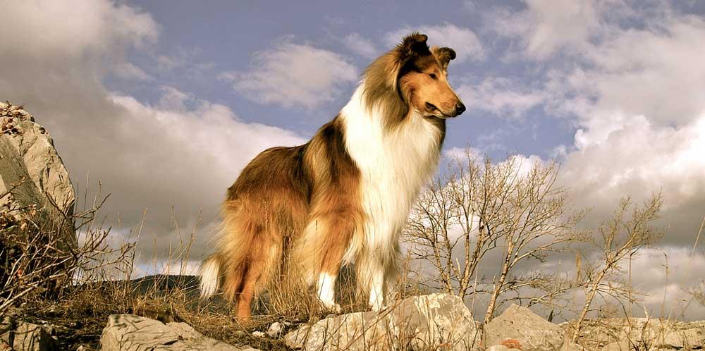 Собака по знаку зодиака