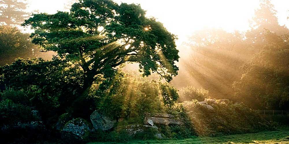 Как правильно использовать энергетику деревьев