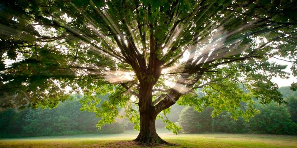 Какой бывает энергетика деревьев и что с ней делать?