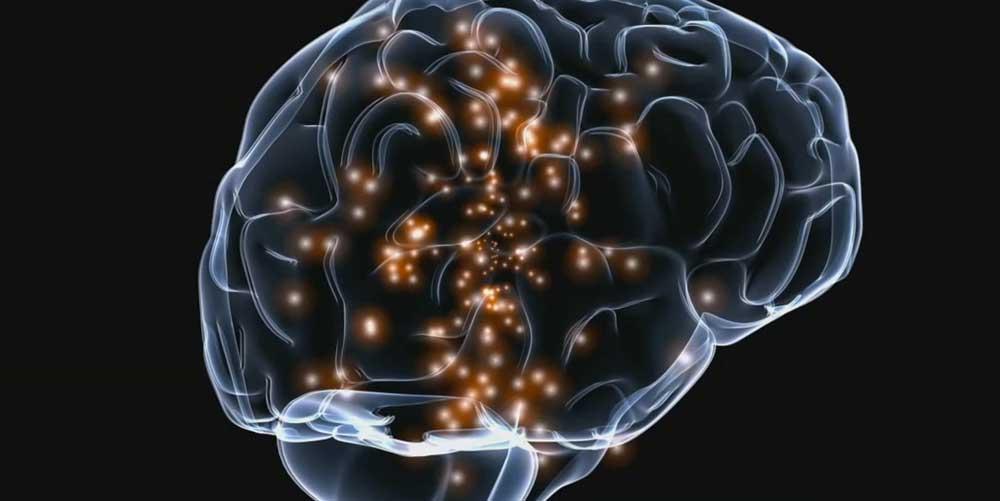 Восприятие реальности. Мозг
