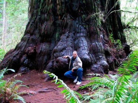 10 самых высоких деревьев на планете. Лорелин